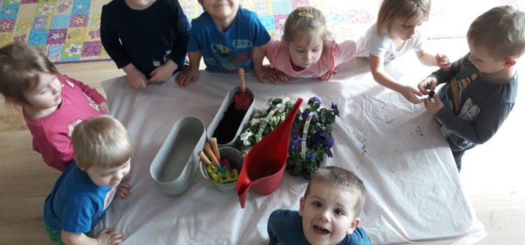 Biedronki sadzą kwiatki :)